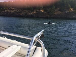 San Juan whale